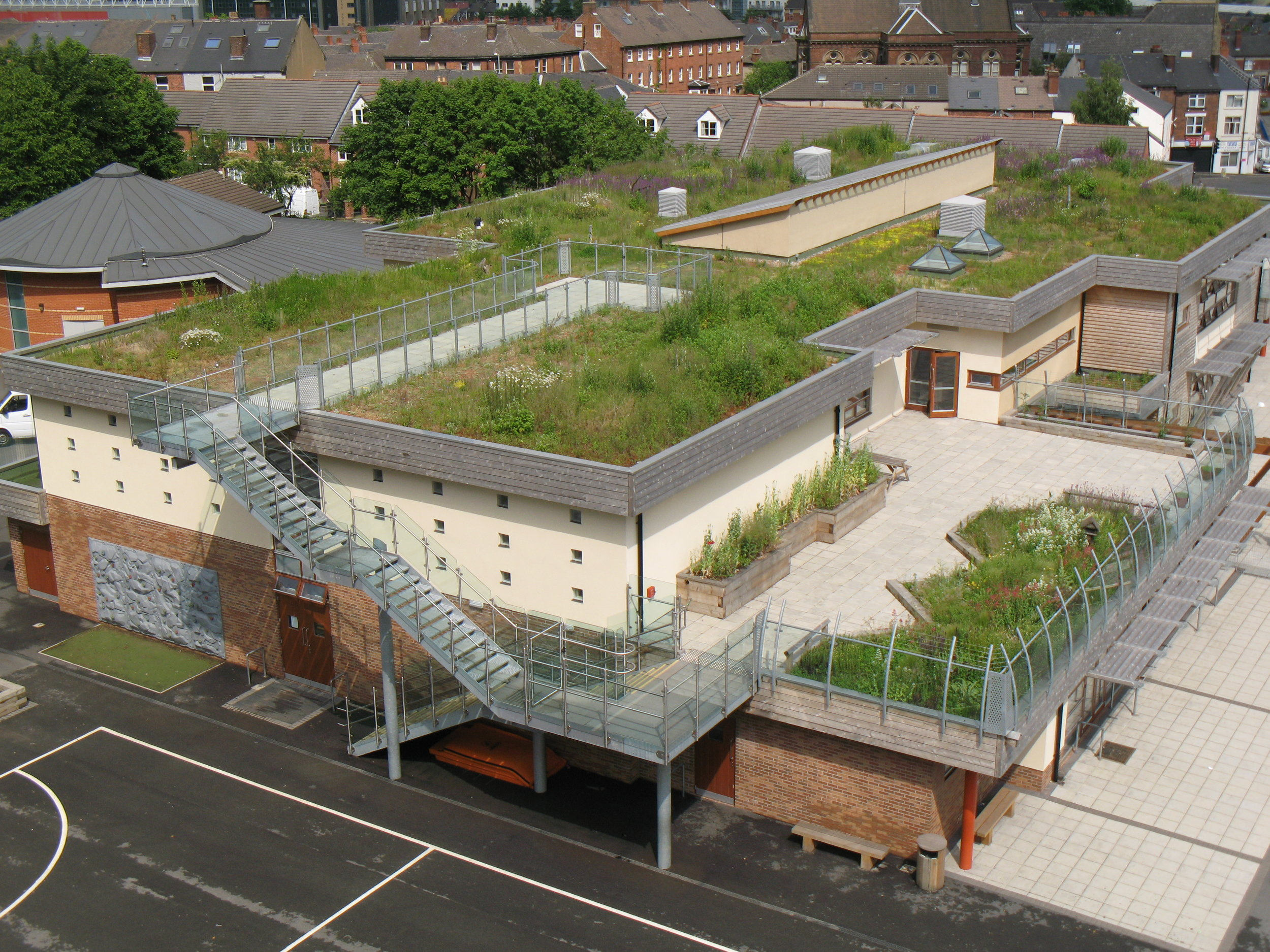 Green Roof of a School