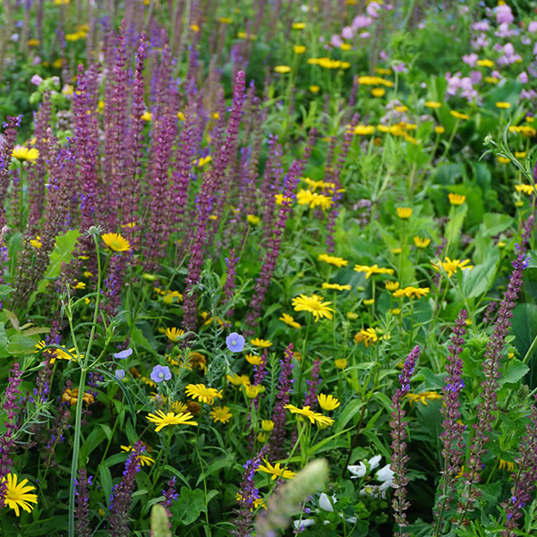 Super Pollinator Perennial Meadow